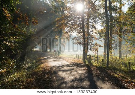 two people walking on a small forest road in moody morning light