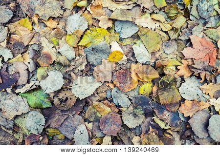 Colorful Autumnal Leaves Layer