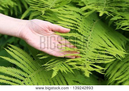 Girl's hand touching fern leaf. Macro. Background