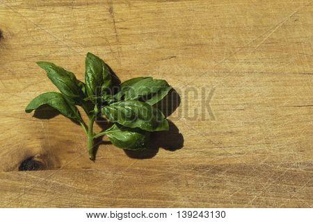Fresh basil on wooden cutting board. Flat lay food background.