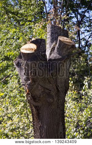 picture of a cut tree trunks deforestation concept