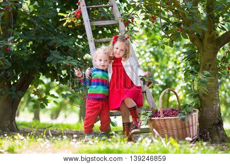 Kids picking cherry on a fruit farm. Children pick cherries in summer orchard. Toddler kid and baby eat fresh fruit from garden tree. Girl and boy eating berry in a basket. Harvest time fun for family
