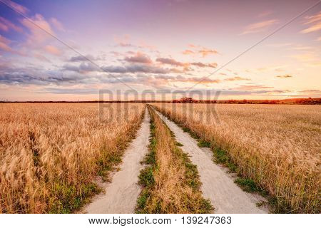 Rural Countryside Road Through Wheat Field. Yellow Barley Field In Summer. Agricultural Season, Harvest Time.