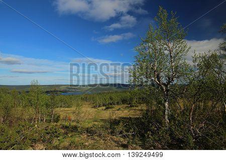 View Over Bogs Near Bakvattnet In Sweden