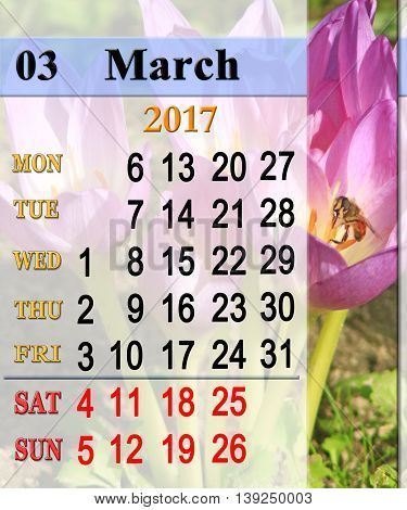 calendar for March 2017 with flowers of pink flowers of colchicum