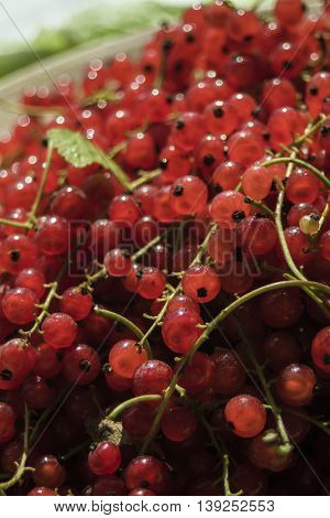 Closeup on fresh harvest of red currant in wooden bowl.