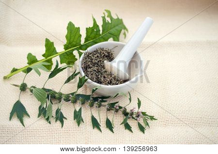 motherwort fresh and dried herbs in a mortar
