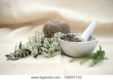 fresh herbs and white ceramic mortar on light background
