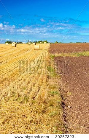 Stacks of straw bales of hay rolled into stacks left after harvesting of wheat ears agricultural farm field with gathered crops rural. Straw field bordered with ploughed fertile virgin land. Estonia
