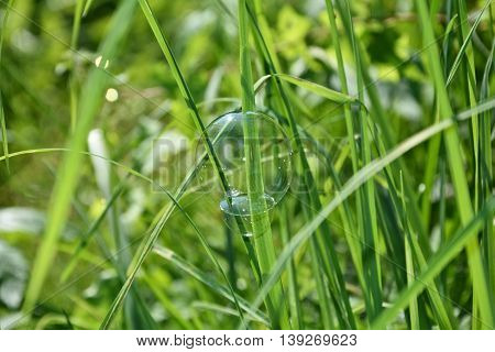 A soap bubble hanging on a blade of grass outdoors