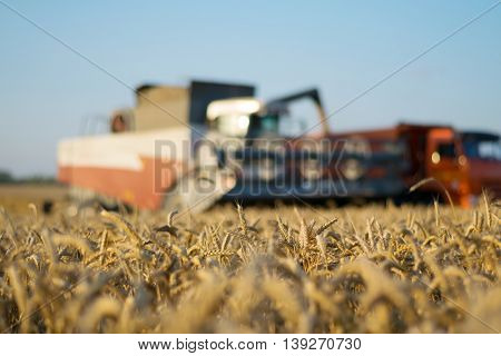 Harvester and truck at field during harvest time, focus on wheat, shallow dof