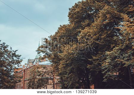 Fall view of centre Saint-Petersburgg, Russia. Concept autumn in the city park, europe background. Brown big tree and orange old historic building with grey blue sky in day during fall season outdoor. September, October, November.