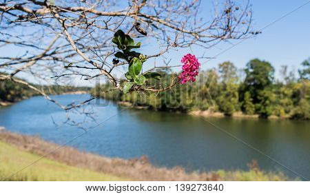Black Warrior River near Moundville, Alabama with pink flowering tree blossom