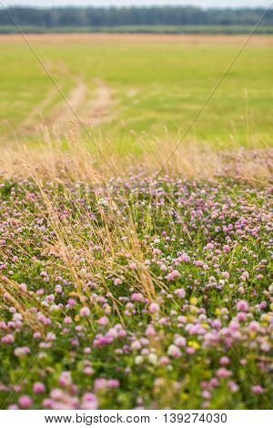 Summer concept for nature backgraund: Abundance of blooming wild flowers on the field at summer, sunny day. Vertical