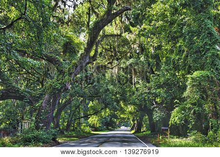 The road to Edisto Beach, through rural South Carolina, passes through lots of