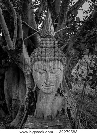 Ancient wooden Buddha statue head cracked and burned on bodhi tree background in hermitage at northern of thailand Black and White Filter