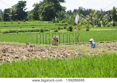 farming in countryside of Thailand selective focus and tone color