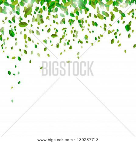 leaves confetti on white background for you design