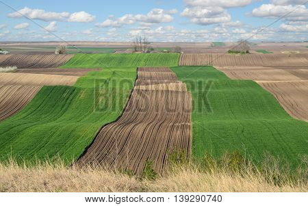 Young wheat farmland in early spring. Agriculture in Europe