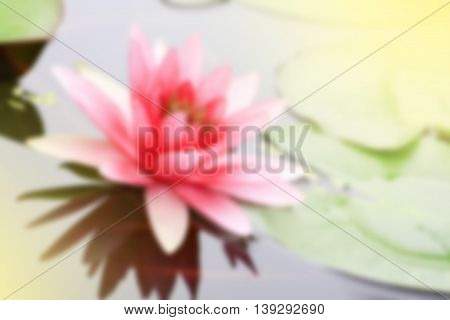 de-focused; pink water-lily in nature pond the water-lily is a symbol of holy flower in Buddhism flower use offer sacrifice for monk and Buddha image