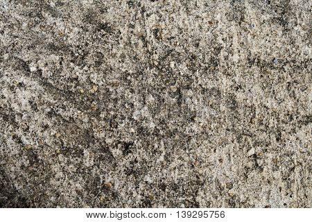 background textured surface cement  on the floors plaster rough have black moss