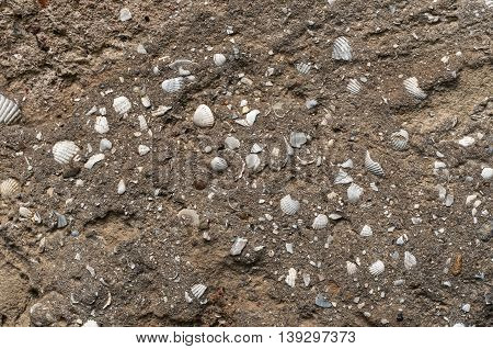 a texture of sandstone with shells inside of it