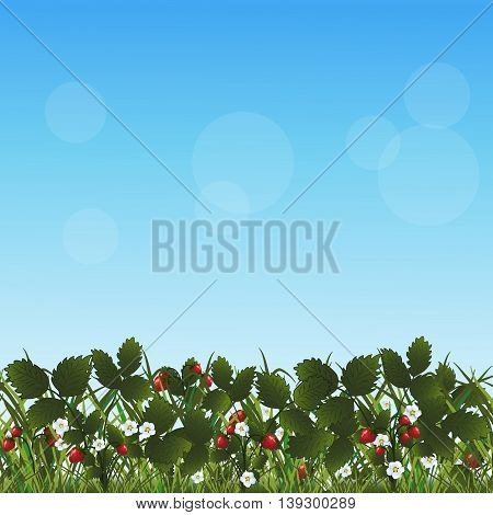 lawn with flowers strawberries and herbs on a blue background