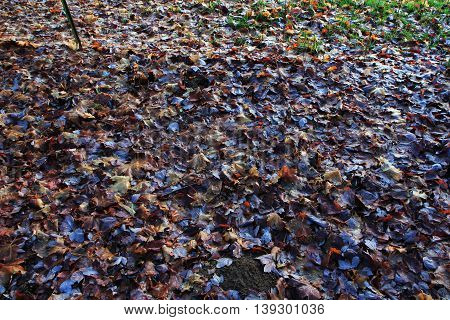 Wet grass and leaves jungle leaf background forest fresh