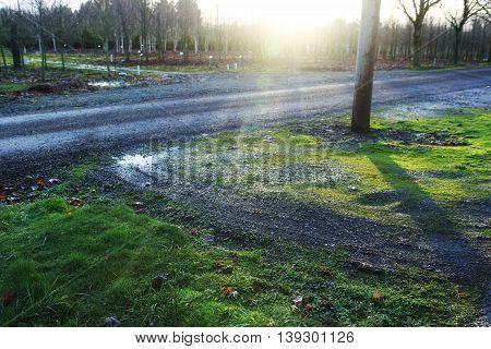 fresh green grass lawn in sunlight, landscaping, beauty of summer season