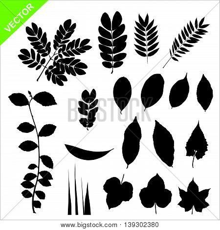 Collections of silhouette leaves vector on white baackground
