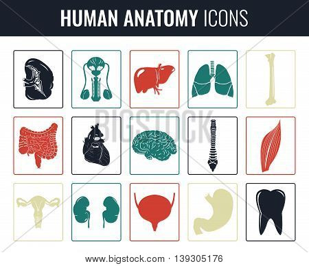 Human internal organ anatomy set. Vector illustration