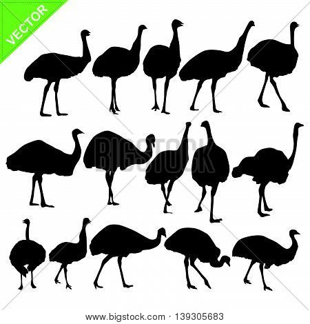 Ostrich silhouettes vector collections on white color background