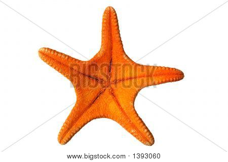 The Underneath Of An Orange Starfish.