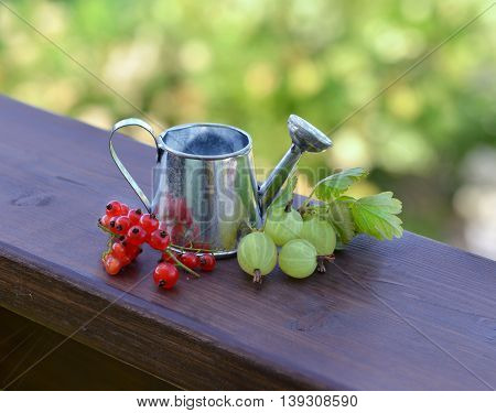 Summer still life with ripe gooseberries, red currant berries and small watering can.  Seasonal background, rural countryside still life, vintage or retro concept