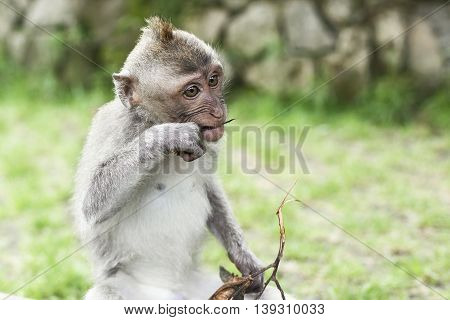 Wildlife african Monkey Portrait in the forest