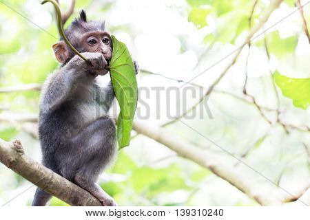 Wildlife Monkey tropical Portrait in the forest