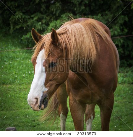 Portrait of brown horse on the glade