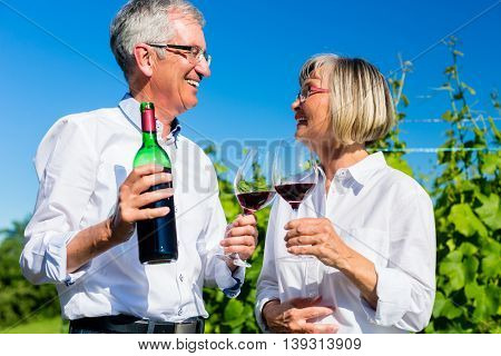 Senior woman and man drinking wine in vineyard toasting with the glasses