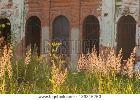 Part of the facade old ruined abandoned castle , brick walls, arched windows, and illuminated by sun in front grass, focus on the grass