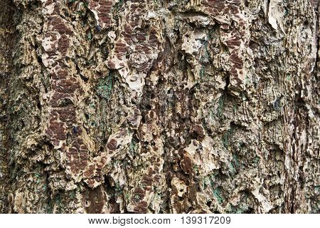Bark background with two sow bugs on the left side