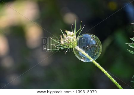 A soap bubble is dependent on a plant outdoors