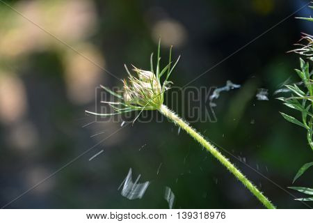 A soap bubble bursts on a plant outdoors