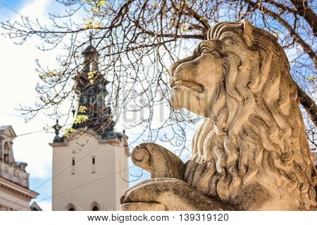 An ancient Lions' statue in front of Town Hall on the Market (Rynok) Square in Lviv, Ukrain. Lviv - city in western Ukraine, capital of historical region Galicia. Stone sculpture of lion.