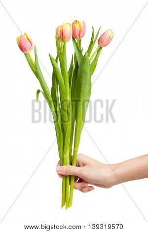 Tulips in female hand isolated on white background