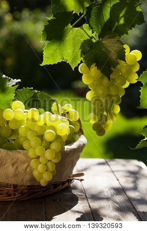 White grapes in basket on garden table