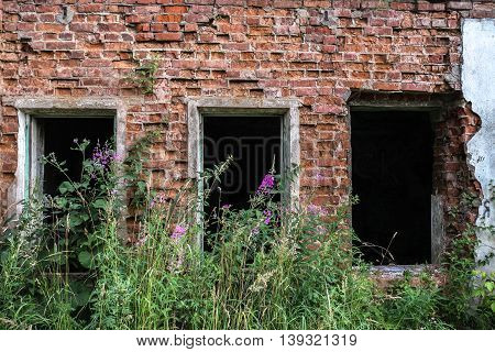On ruins of the ancient house the grass and flowers quietly grows.