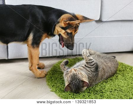 Cute cat and funny dog playing on carpet