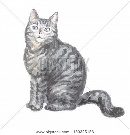 sitting silver tabby cat. Image of a thoroughbred cat. Watercolor painting.