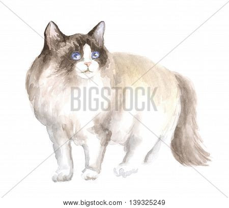 the ragdoll cat. Image of a thoroughbred cat. Watercolor painting.