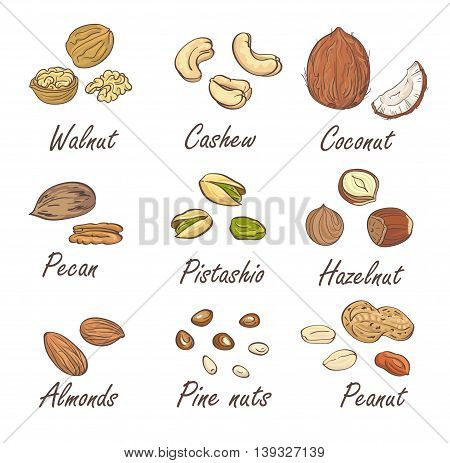 Vector set of hand sketched nuts on white background in hand drawn style: hazelnut almonds peanuts walnut cashew pine nut pistachios coconut pecan